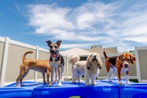 K9 Pet Resorts franchise